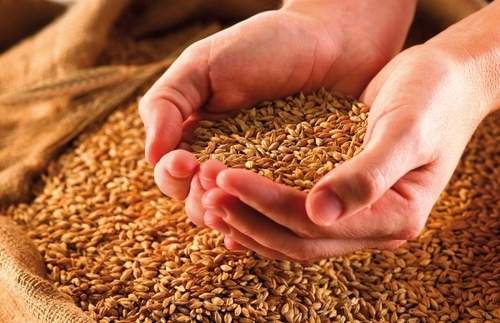 Diet of grain in 2016 to purify the body